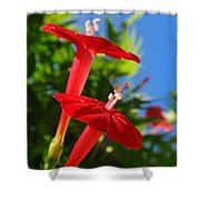 Cardinal Climber Flowers Shower Curtain by Christina Rollo