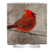 Cardinal In Snow Shower Curtain by Lois Bryan