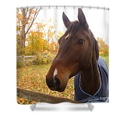 Care Free Country Shower Curtain by Lingfai Leung