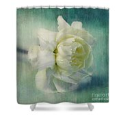 Carnation Shower Curtain by Priska Wettstein