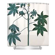 Castor Oil Plant Shower Curtain by Indian School