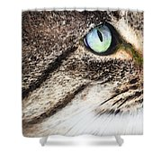 Cat Art - Looking For You Shower Curtain by Sharon Cummings