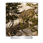 Cat Walk Shower Curtain by Priscilla Burgers