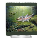 Catch It Shower Curtain by Donna Tucker