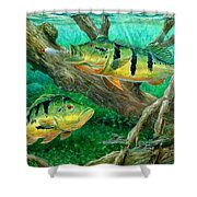 Catching Peacock Bass - Pavon Shower Curtain by Terry Fox