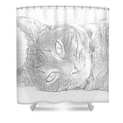 Cat's Eye Shower Curtain by J D Owen