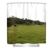 Cattles At Fernandez Ranch California - 5d21124 Shower Curtain by Wingsdomain Art and Photography