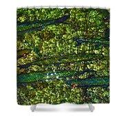 Cayman Tarpon Shower Curtain by Carey Chen