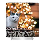 Charly And The Xmas Tree Shower Curtain by Edward Kreis