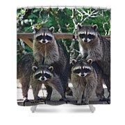 Cheerleading Raccoons Shower Curtain by Kym Backland