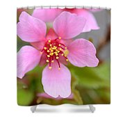 Cherry Blossom Shower Curtain by Lisa Phillips