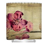 Cherry Blossom with Textures Shower Curtain by John Edwards