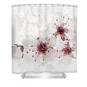 Cherry blossoms close up Shower Curtain by Elena Elisseeva