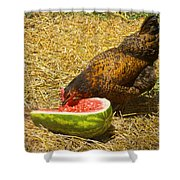 Chicken And Her Watermelon Shower Curtain by Sandi OReilly