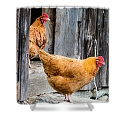 Chickens At The Barn Shower Curtain by Edward Fielding