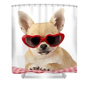 Chihuahua In Heart Sunglasses Dp813 Shower Curtain by Greg Cuddiford