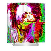 Chinese Crested Dog 20130125v2 Shower Curtain by Wingsdomain Art and Photography