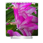Christmas Cactus Flower Shower Curtain by Aimee L Maher Photography and Art