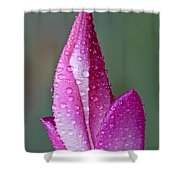 Christmas Cactus Shower Curtain by Susan Candelario