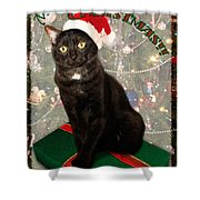 Christmas Cat Shower Curtain by Adam Romanowicz