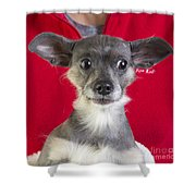 Christmas Dog Shower Curtain by Edward Fielding