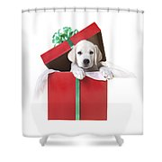 Christmas Puppy Shower Curtain by Diane Diederich