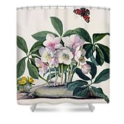 Christmas Rose Shower Curtain by Georg Dionysius Ehret
