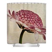 Chrysanthemum Domino Pink Shower Curtain by John Edwards