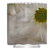 Chrysanthemum Textures Shower Curtain by John Edwards