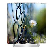 Clash Of The Titans Shower Curtain by Laura Fasulo