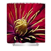 Clematis Center in Oils Shower Curtain by Chris Berry