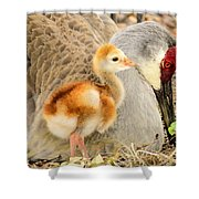 Close To Mother Shower Curtain by Zina Stromberg