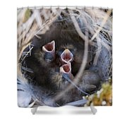 Closeup Of Lapland Longspur Chicks In Shower Curtain by Scott Dickerson