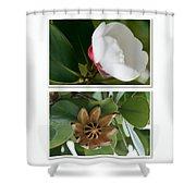 Clusia rosea - Clusia major - Autograph Tree - Maui Hawaii Shower Curtain by Sharon Mau