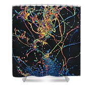 Coalescence Shower Curtain by James W Johnson