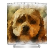 Cocker Spaniel Photo Art 03 Shower Curtain by Thomas Woolworth