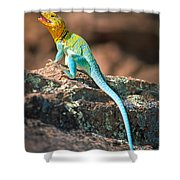 Collared Lizard Shower Curtain by Inge Johnsson