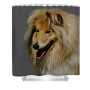 Collie dog Shower Curtain by Linsey Williams