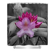 Coming To Life Shower Curtain by Aimee L Maher Photography and Art