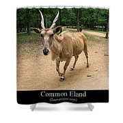 Common Eland Shower Curtain by Chris Flees