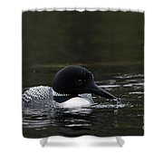 Common Loon 1 Shower Curtain by Larry Ricker