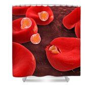 Conceptual Image Of Plasmodium Shower Curtain by Stocktrek Images