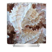 Conches Shower Curtain by Carol Groenen