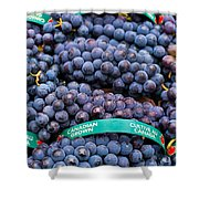 Concord Grapes Shower Curtain by Mary  Smyth