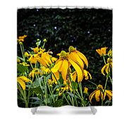 Coneflowers Echinacea Yellow Painted Shower Curtain by Rich Franco