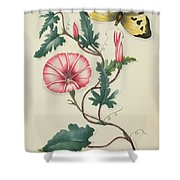 Convolvulus With Yellow Butterfly Shower Curtain by English School