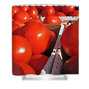Cool Tomatoes Shower Curtain by Barbara McDevitt