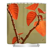 Copper Plant Shower Curtain by Ben and Raisa Gertsberg