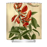 Coral Tree Shower Curtain by Philip Ralley
