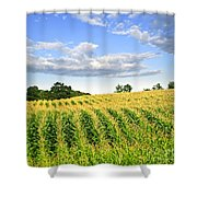 Corn Field Shower Curtain by Elena Elisseeva